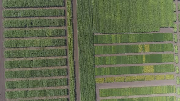 Thumbnail for Aerial view of fields