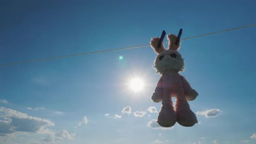 Cute Plush Hare Dries on the Rope