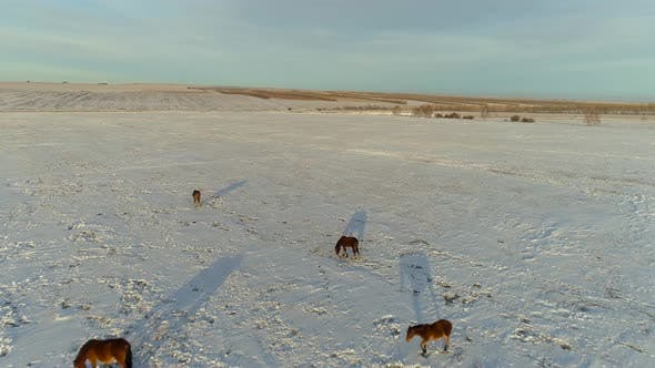 Horses in Winter Steppe
