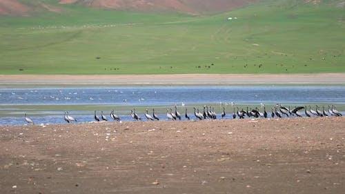 Echte Wildvögel im natürlichen Seeufer