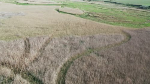 Aerial View of a Reed Plantation