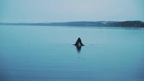 Scary figure in black mantle. Horror woman soaking in water river.