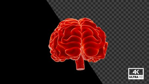 Human Brain Seamlessly Rotated With Alpha V4