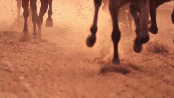 Cover Image for Horse Racing Feet
