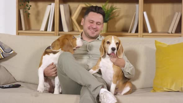 Joyous Mid-Aged Man Sitting on Sofa with Two Adorable Beagle Dogs