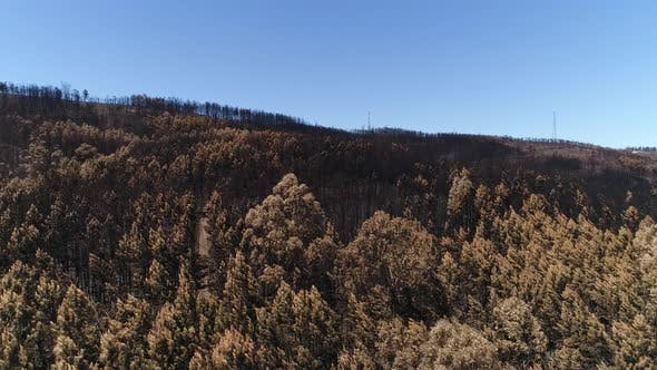 Thumbnail for Panoramic View of Burned Pines