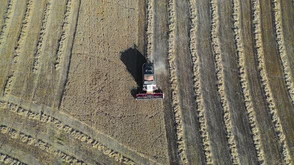 Thumbnail for Top View of a Combain Collecting Corn. Agriculture and Farming, Campaign. Drone Point of View