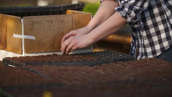 Thumbnail for Close Up of Female Gardener Arranges Seedlings