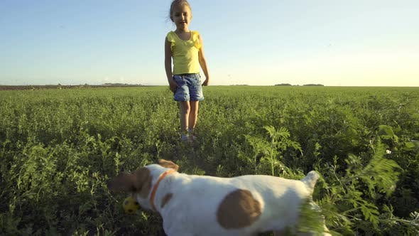 Cover Image for Child Playing With Dog Pet Jack Russell Terrier In The Summer Field With Grass And Blue Sky