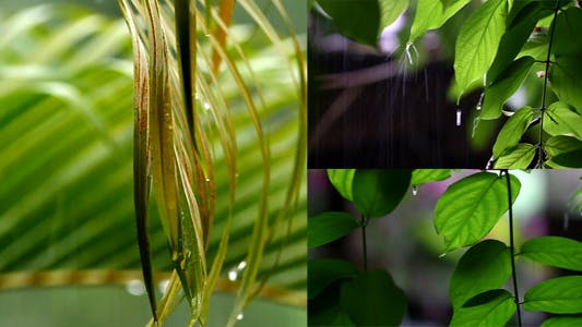 Thumbnail for November Rain Pack 1 - Full HD