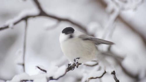 The Bird Sits on a Branch Looks Around and Then Flies Away