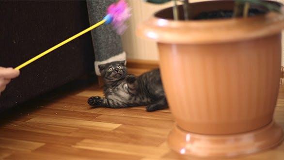 Thumbnail for Playful Kitten 3