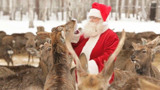 Thumbnail for Santa Has Herd