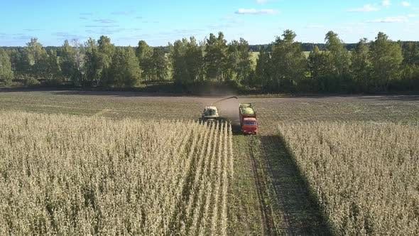 Thumbnail for Self-propelled Forage Harvester Loads Corn Into Vehicle