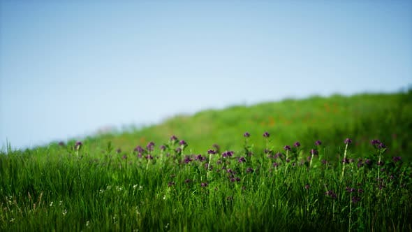 Thumbnail for Field of Green Fresh Grass Under Blue Sky