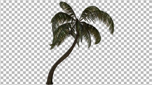 Cover Image for Palm Tree