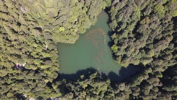 Thumbnail for Lake in Forest