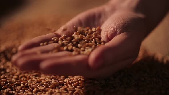 Thumbnail for Hard-Working Farmer Holding Handful of Grain Seeds, Proud of Labor Results