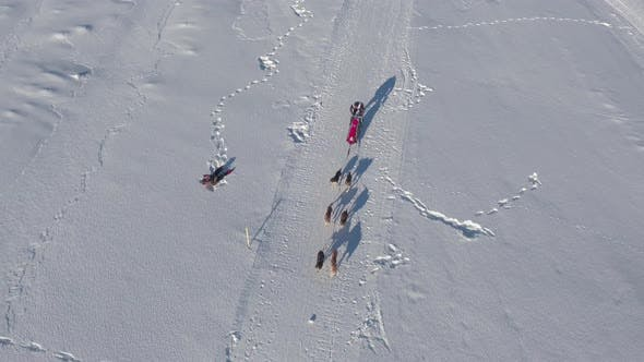 Thumbnail for Aerial view of dogs pulling a sled