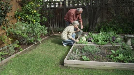 Thumbnail for Seniors gardening together