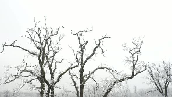 Thumbnail for Tree in Winter