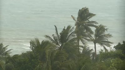Seaside Landscape During Natural Disaster Hurricane. Strong Cyclone Wind Sways Coconut Palm Trees