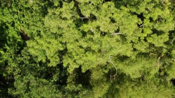Thumbnail for Flying Over The Thick Tropical Forests Of Bali.