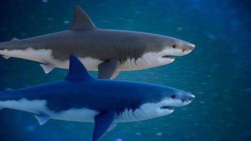 Shark Loop Swimming 2 version