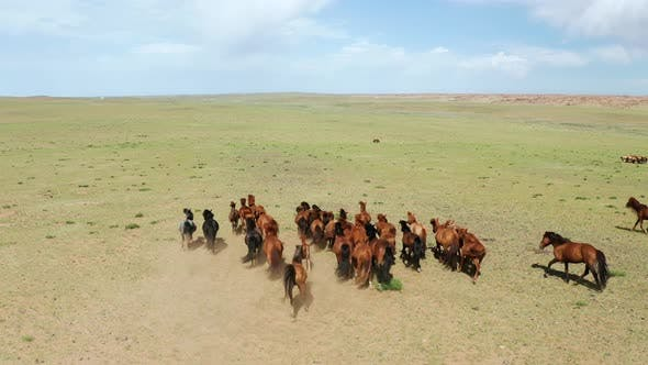 Thumbnail for Aerial Drone Shot, Flying Over a Herd of Horses in Steppes in Mongolia