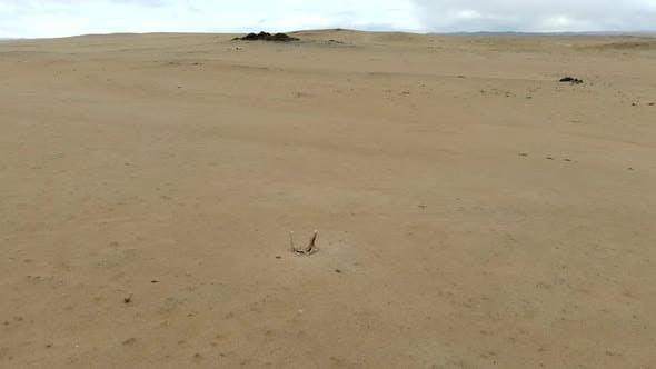 Deer Stones Stele in the Desert