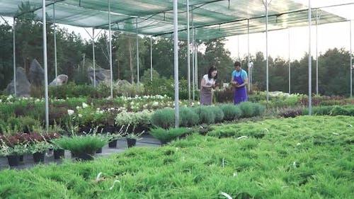 Workers of the Garden Center in Work
