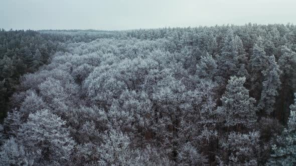 Thumbnail for Panoramic View of Thick Forest in Winter