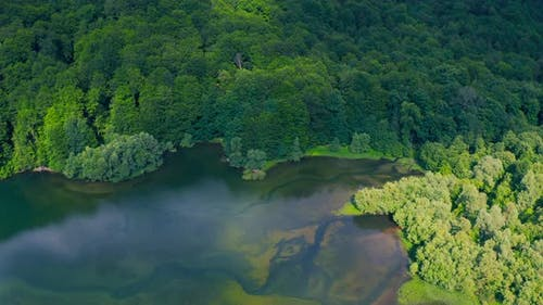 Beautiful Green Waters of Lake with Pine Trees