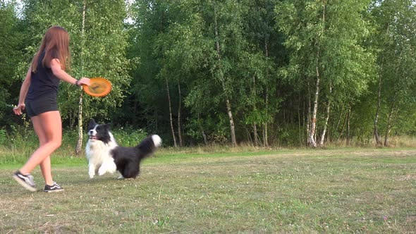 Cover Image for A Woman Throws a Frisbee To a Border Collie Who Fetches in a Meadow in a Forest