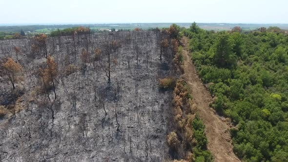A Border of Gray Trees Burned to Ash in the Forest and Green Unburned Trees