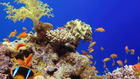 Thumbnail for Beautiful Underwater Colorful Corals and Fishes