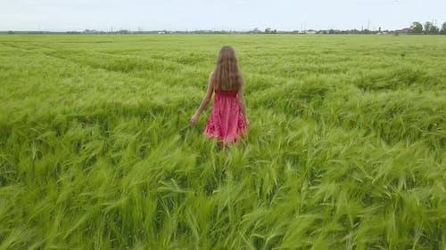 A woman in red dress walking in green wheat field.