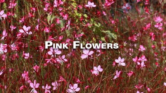 Thumbnail for Pink Flowers