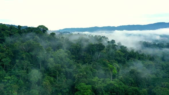 Thumbnail for Hyperlapse of a tropical forest showing the green canopy covered in fog