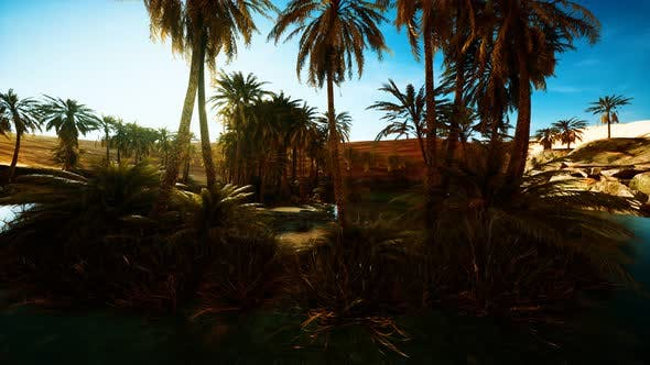 Palmen in der Sahara-Wüste