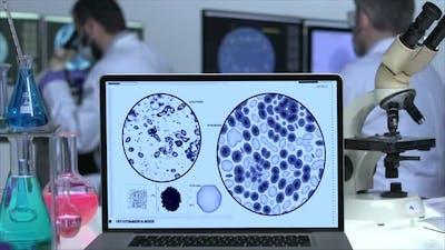 Virus In Laboratory Screen