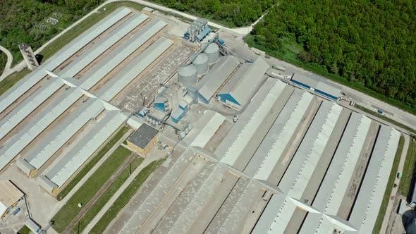 Thumbnail for Luftaufnahme über der großen Tierschweinfarm auf dem natürlichen Hintergrund fliegen. Mittler Schuss