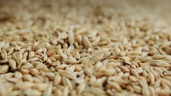 Slider Shot Selected Barley  Raw Materials for Brewing and Other Alcoholic Beverages