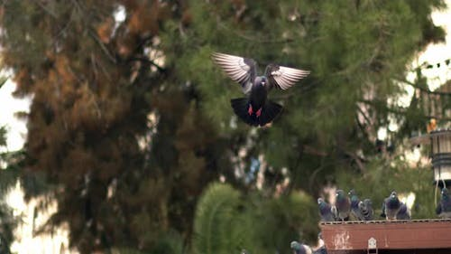 City Pigeons Flying In The Park In Slow Motion 2
