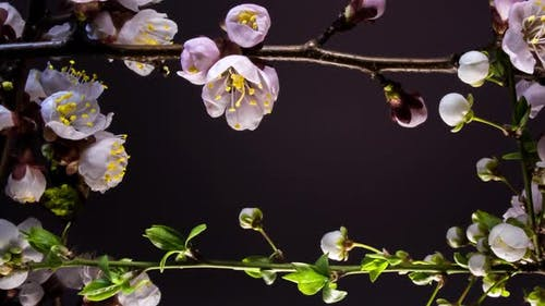 Frame of Blooming Flowers