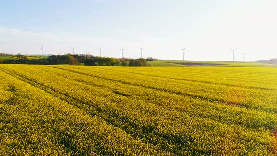 Cover Image for Aerial Shoot of Oilseed Rape Field.