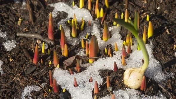 Первые растения после снега