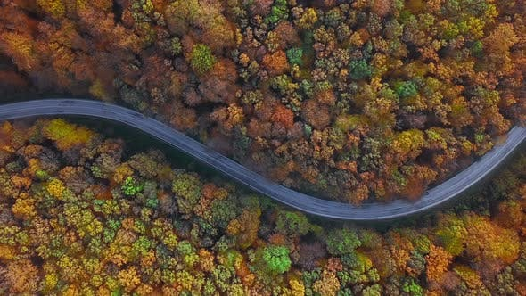 Thumbnail for Aerial of Cars Driving Through Sunny Autumn Forest