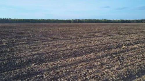 Harvested and Plowed Field Lies Fallow Against Forest