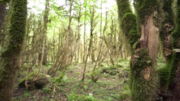 Thumbnail for Mossy Tree Bark